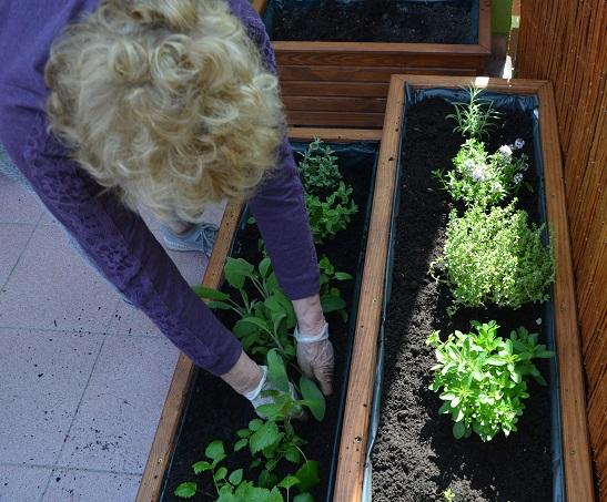 Zasadzanie w ogrodowych donicach